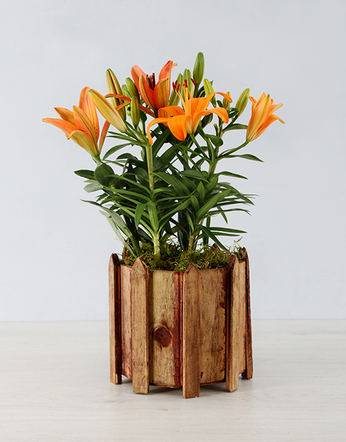 lilies: Asiatic Lily in Wooden Spike Vase!