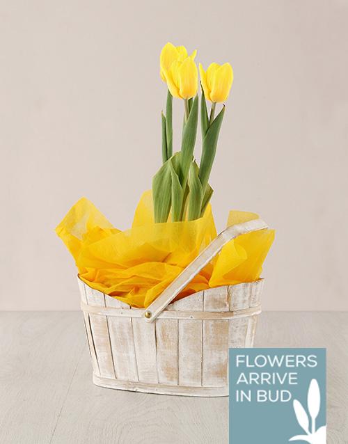 flowering: Yellow Tulip Plant in White Wash Basket!