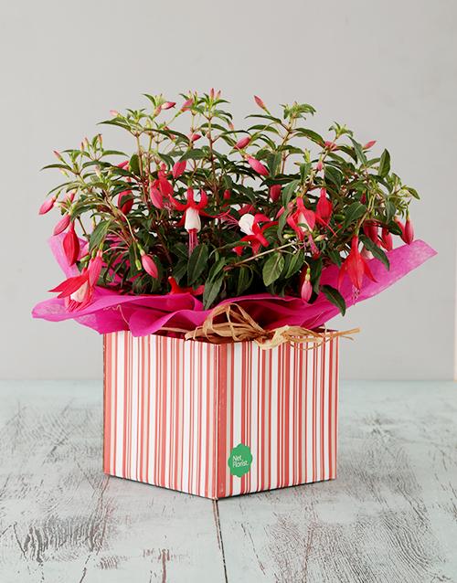 in-a-box: Pink Fuchsia Box!