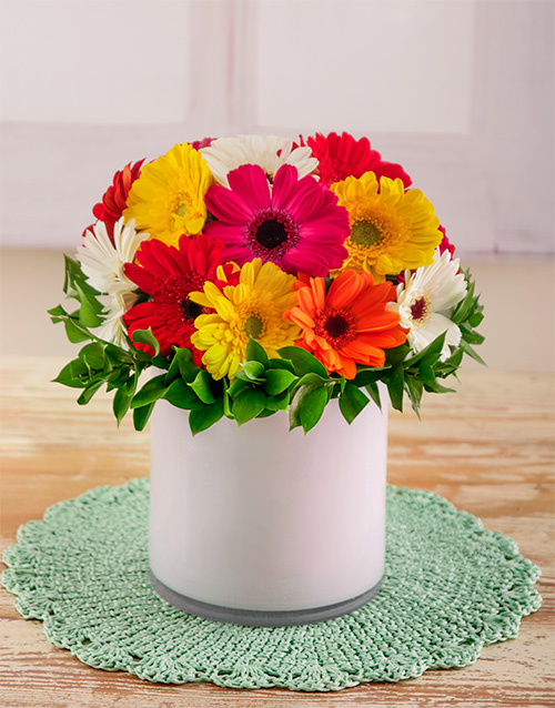 coloured-vases: Mixed Gerberas in a White Cylinder Vase!