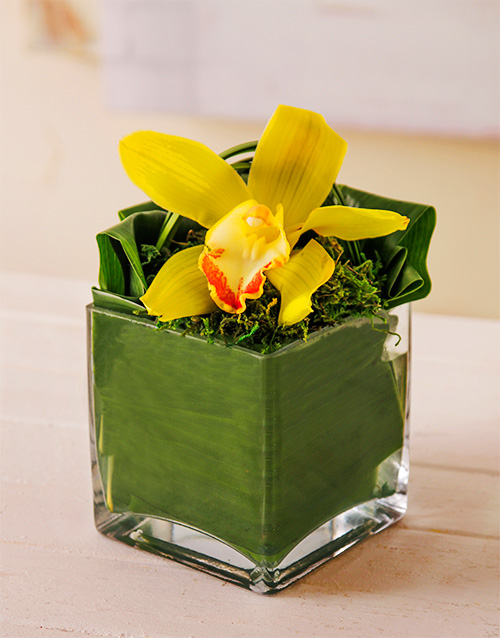 friendship: Single Orchid in Square Vase!