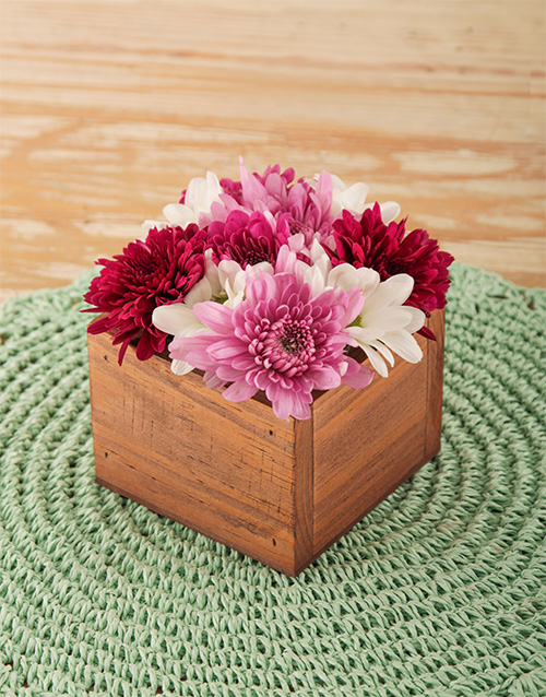 daisies: Pink and Red Sprays in Wooden Box!