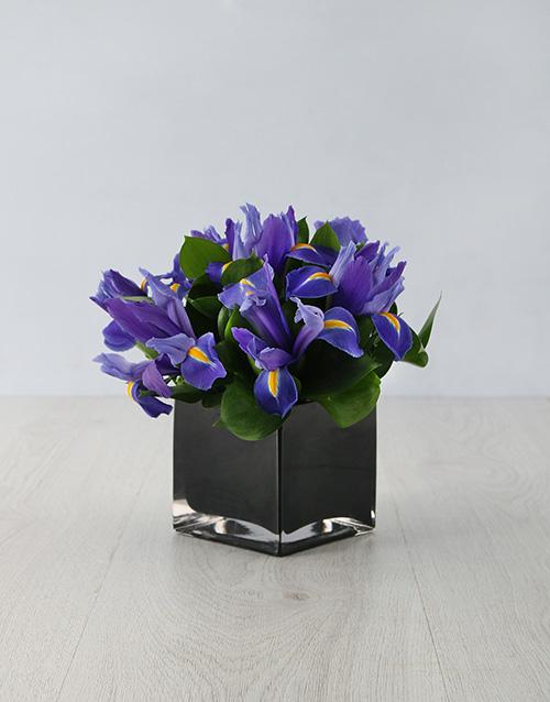 coloured-vases: Charming Irises in Square Vase!