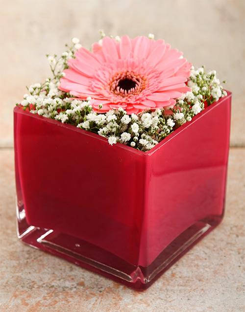 gerbera-daisies: Pink Star Vase!