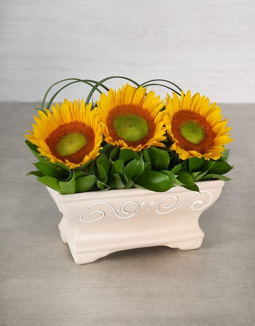 sunflowers: Green Button Sunflower Pot!