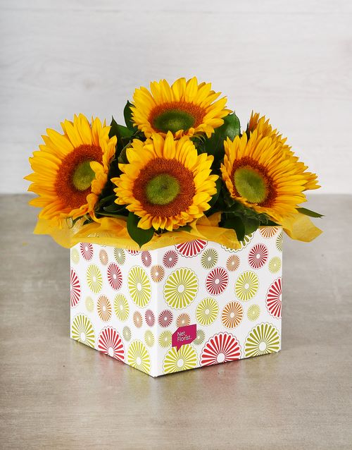 in-a-box: Green Button Sunflowers in Occasion Box!