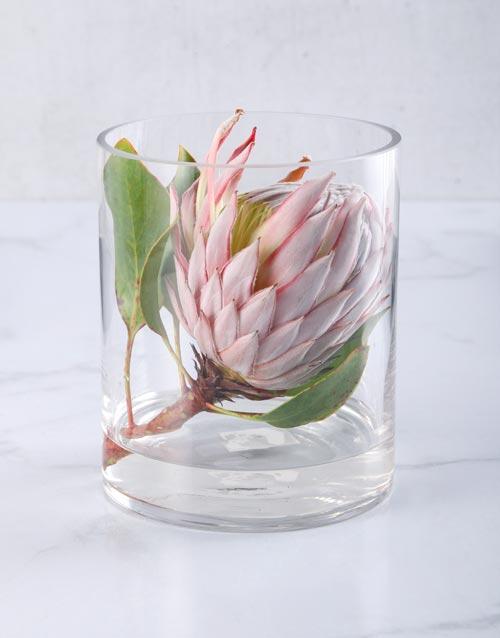 seasonal: King Protea in Short Cylinder Vase!