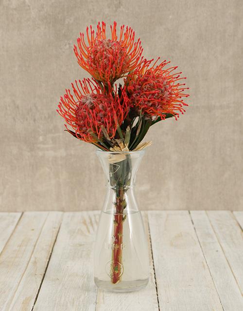 seasonal: Pincushion Proteas in Elegant Vase!