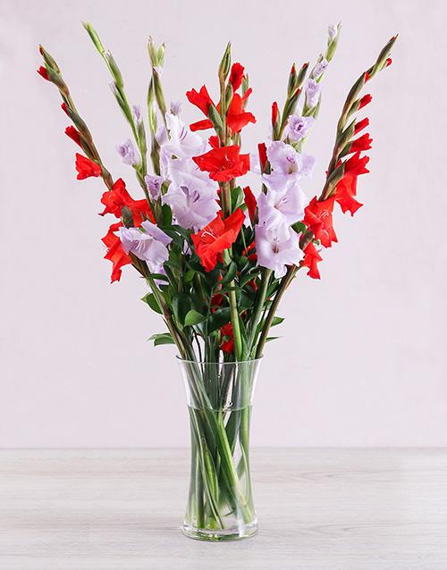 gladiolus: Purple and Red Gladiolus Vase!