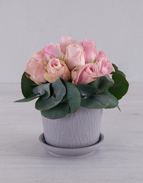 flowers: Pastel Pink Roses in Grey Pot!