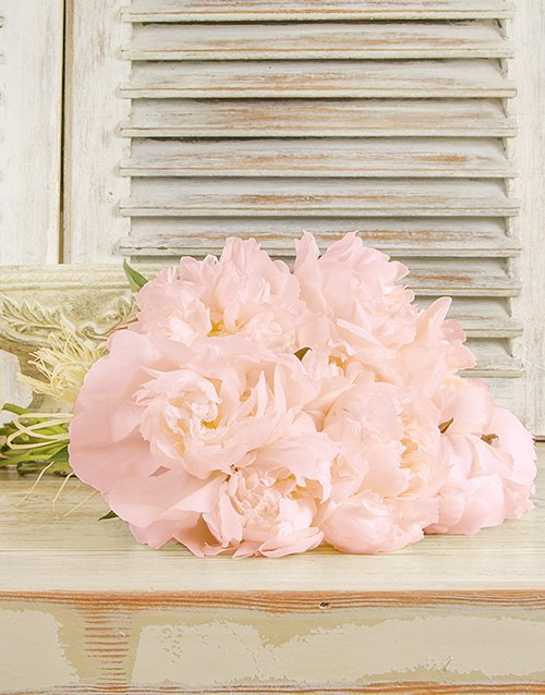 anniversary: Light Pink Peonies in a Bouquet!
