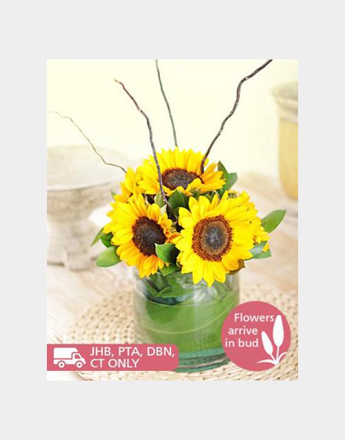 birthday: Cylinder Vase of Sunflowers!