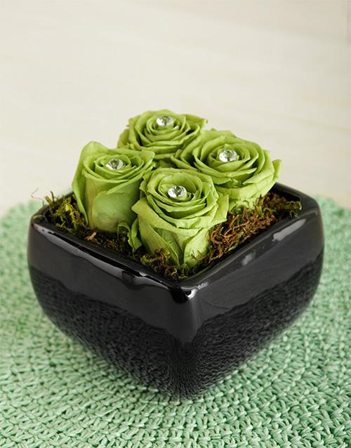 luxury: Green Preserved Roses In Black Pot!