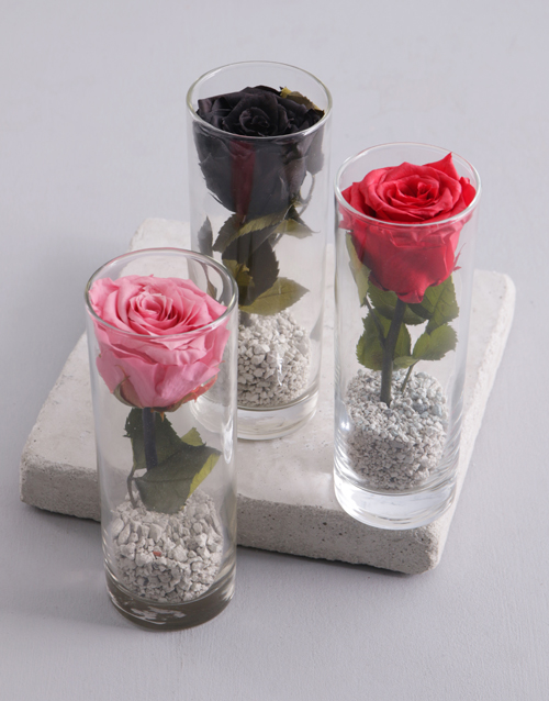 prices: Small Cylinder Vase With A Preserved Rose!