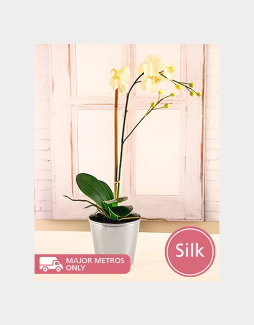 silk: Silk Phalaenopsis Orchid in Silver Tin!