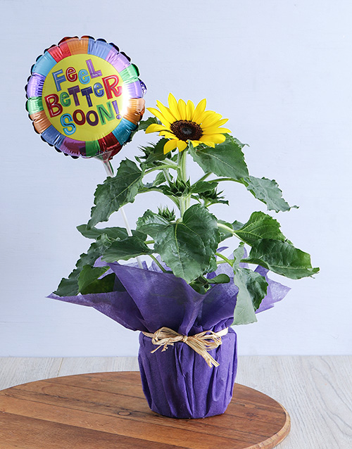 sunflowers: Sunflower with Get Well Soon Balloon!