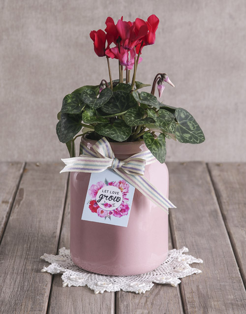 colour: Let Love Grow Cyclamen!