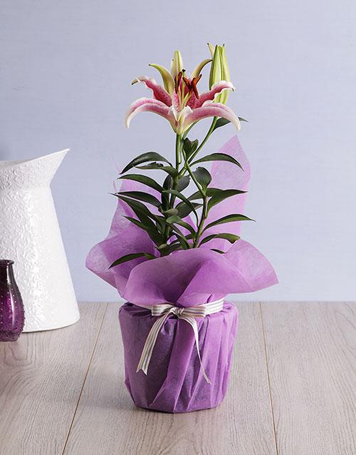 grandparents-day: Oriental Lily Pot!