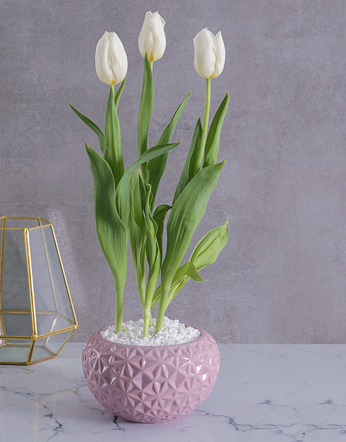 tulips: White Tulip in Pink Geo Planter!