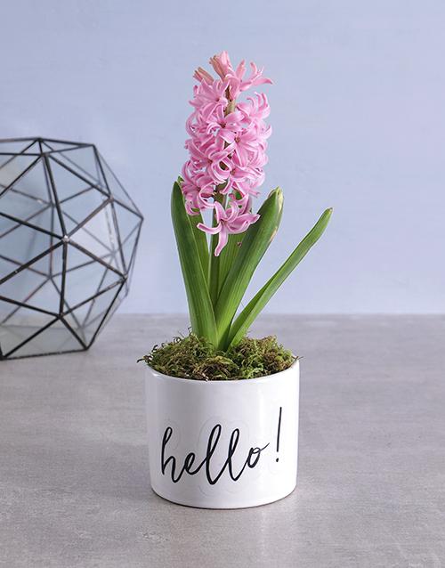 flowers: Hello Hyacinth!