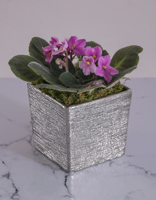 colour: African Violet in Silver Ceramic!