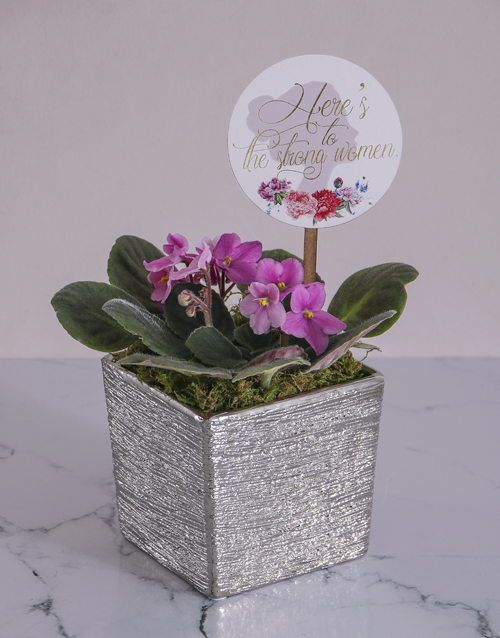 colour: Here is to the Strong Women African Violet!