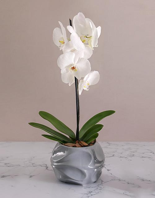 baby: Phalaenopsis in Grey Swirl Pot!