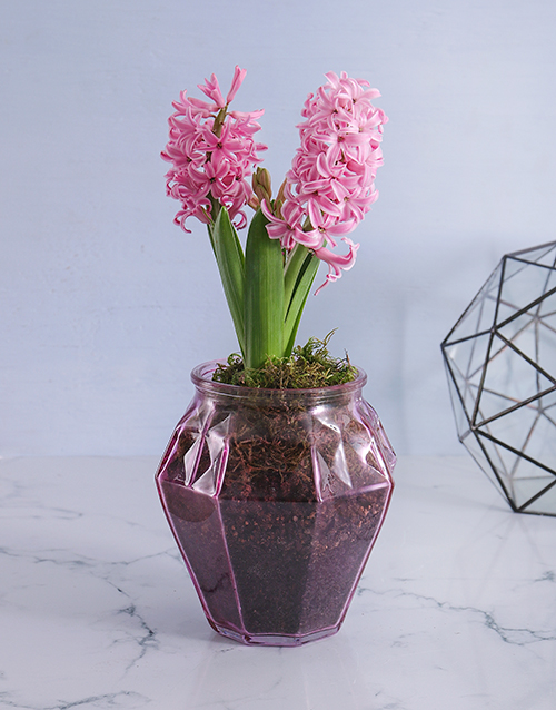 seasonal: Pink Hyacinths in a Geometric Vase!