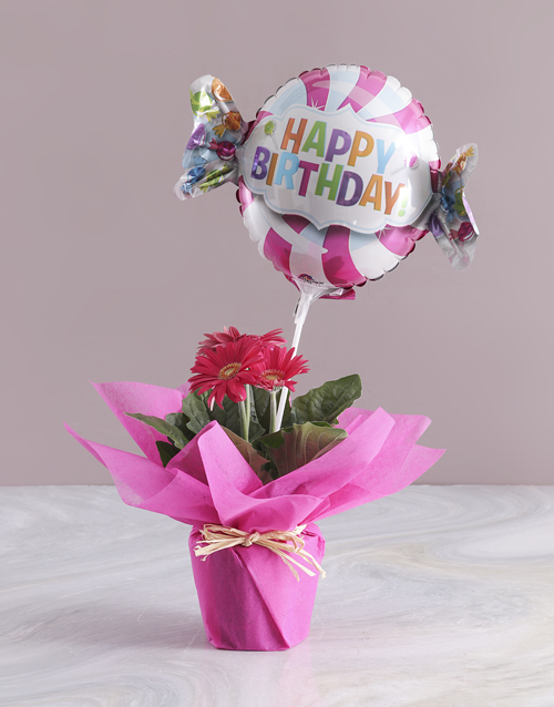 flowers: Luxuriant Birthday Gerbera!