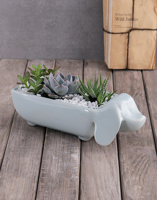 friendship: Succulents In Ceramic Sausage Dog!