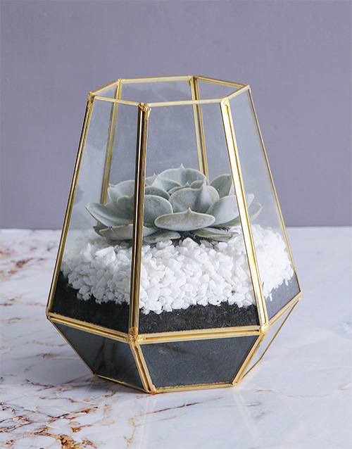 flowers: Succulent in a Tall Geo Terrarium!