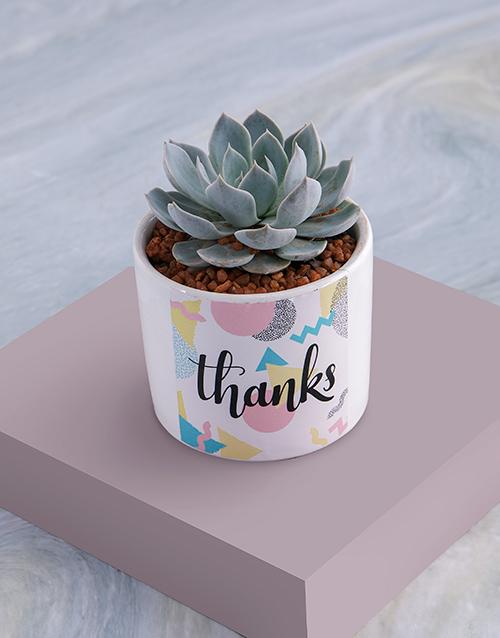 grandparents-day: Thanks Succulent In White Ceramic Pot!