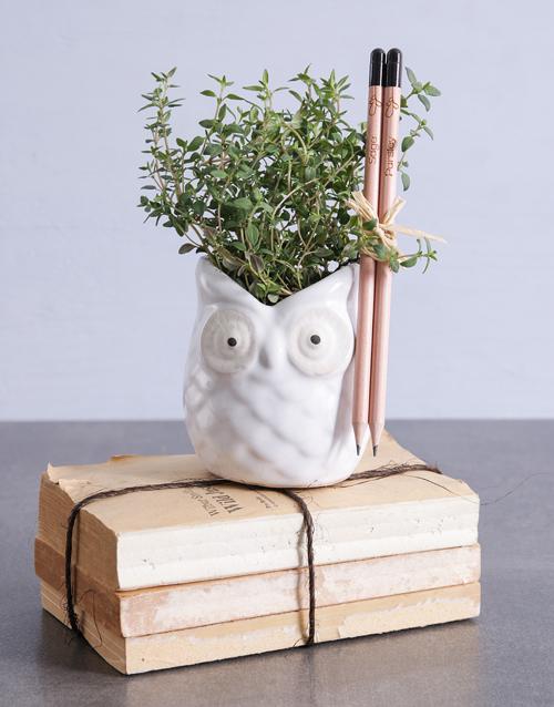 teachers-day: Evergreen Thyme In Owl Pot!