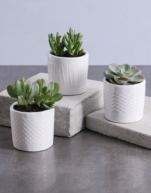 pottery: Potted Succulent in Ceramic!