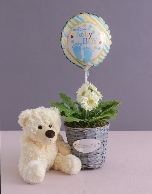 balloon: Baby Boy Gerbera Plant in a Basket!