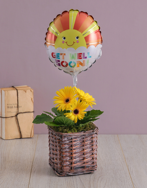 flowers: Get Well Gerbera Plant in a Basket!