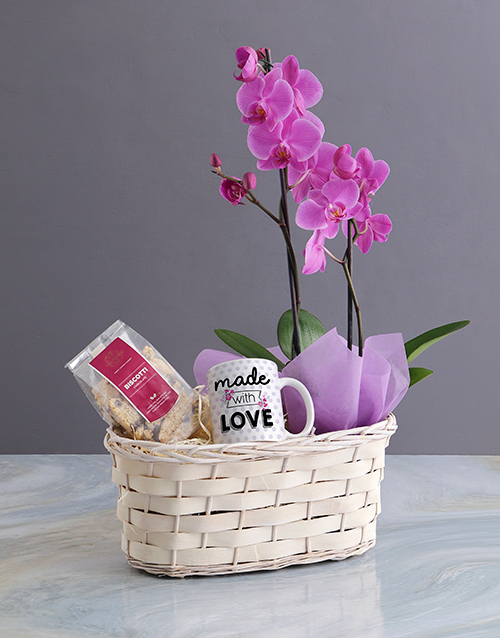 new-years: Phalaenopsis Orchid Gift Basket!