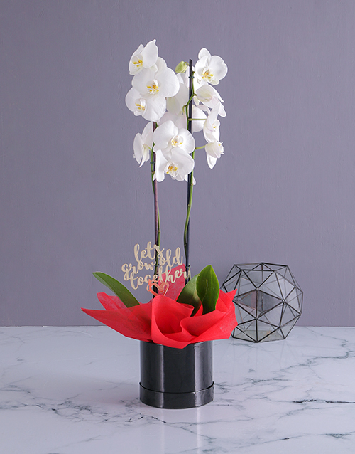 colour: Grow Old Together Orchid in a Hatbox!