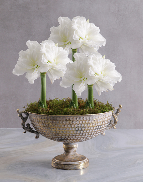 lilies: Amaryllis in Gold Chalice Bowl!