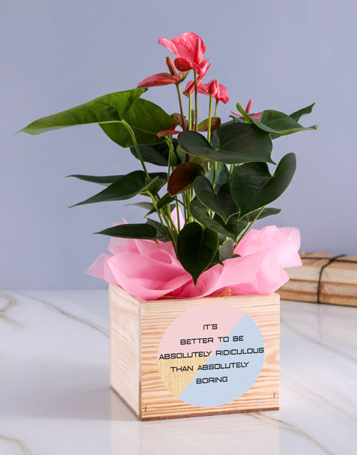 lilies: Absolutely Anthurium Plant!
