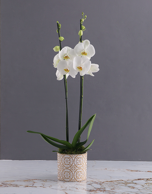 christmas: Two Stemmed White Orchid In White and Gold!