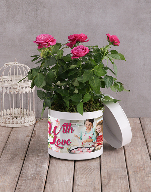 mothers-day: Cerise Rose Bush In White Hatbox!