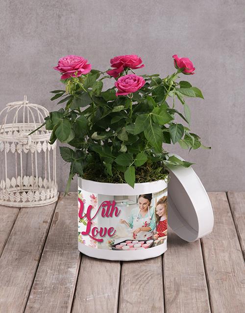 personalised: Cerise Rose Bush In White Hatbox!