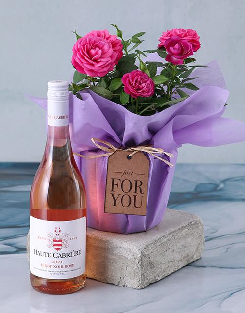 anniversary: Cerise Rose Bush In Purple Wrap!