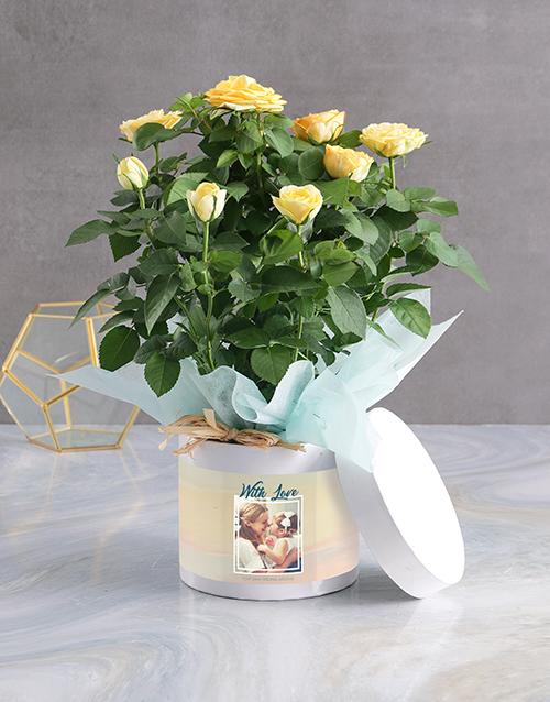 in-a-box: Yellow Rose Bush Arrangement!