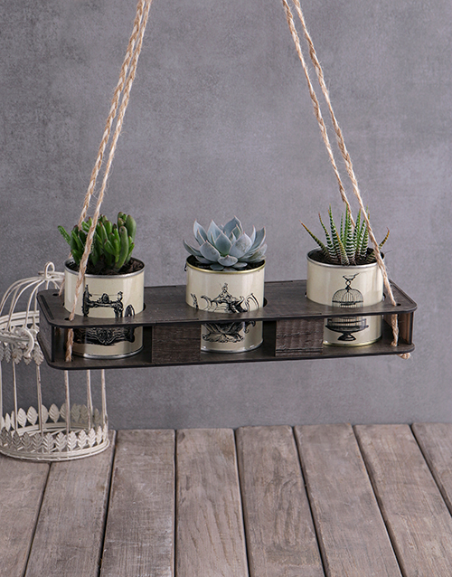 grandparents-day: Set Of Three Succulents In Vintage Tin!