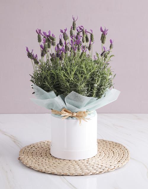 in-a-box: Lavender Birthday Box!