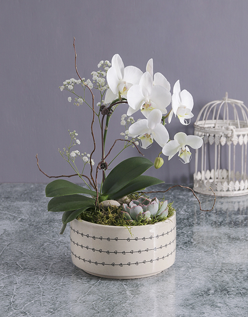 thank-you: Midi Orchid Garden In A Pot!