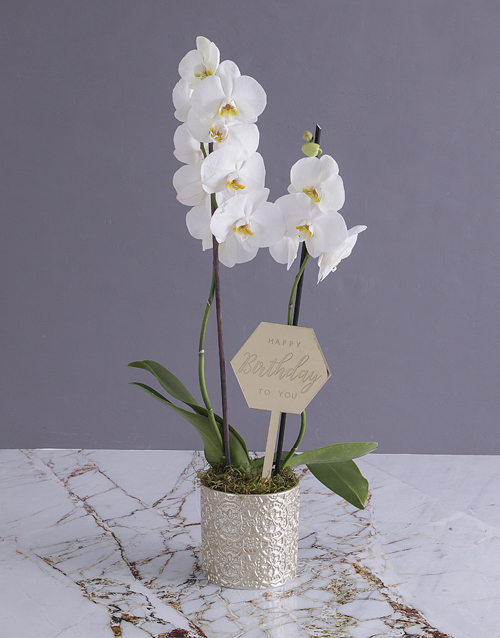 flowers: Happy Birthday Orchid In Gold Pot!