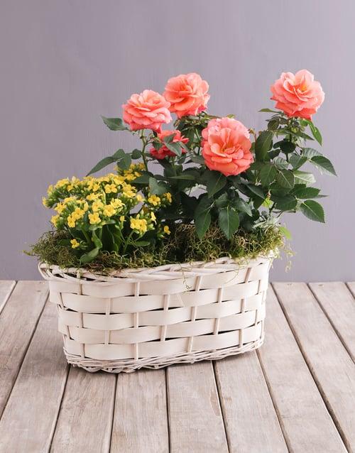 plants: Orange Rose and Yellow Kalanchoe Basket!